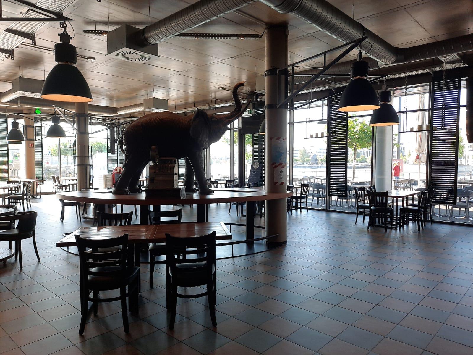 Cafe Solo Dortmund Innenbereich Ewige Liebe Elefant